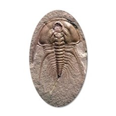 Olenellus gilberti trilobite 35x21 Oval Wall Decal