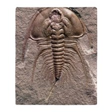 Olenellus gilberti trilobite fossil Throw Blanket