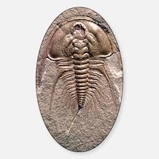 Olenellus gilberti trilobite fossil Decal