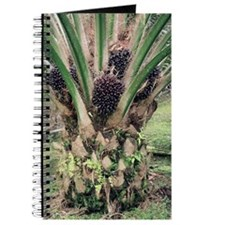 Oil palm tree with fruits Journal