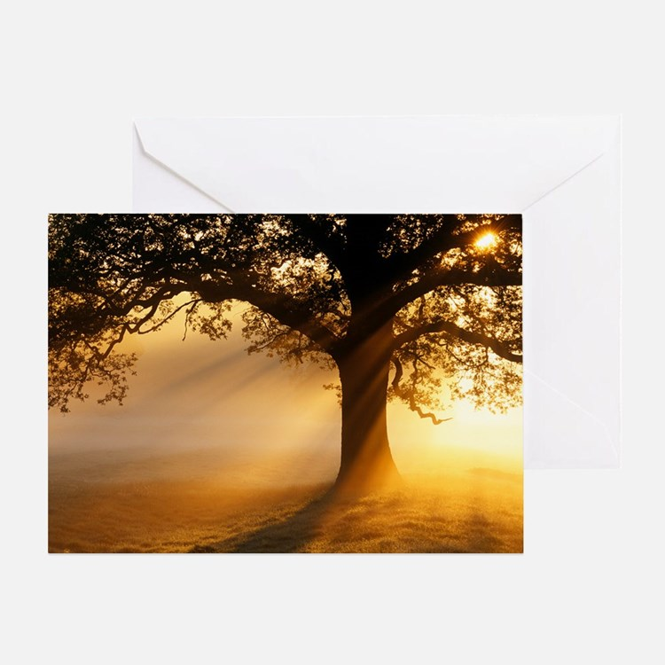 Oak tree at sunrise Greeting Card