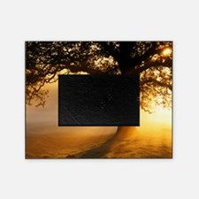 Oak tree at sunrise Picture Frame