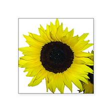 "Sunflower couple Square Sticker 3"" x 3"""