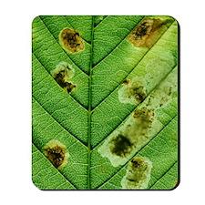 Ocotillo plant Mousepad