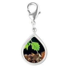 Oak tree (Quercus sp.) seed Silver Teardrop Charm