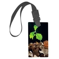 Oak tree (Quercus sp.) seedling Luggage Tag