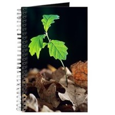 Oak tree (Quercus sp.) seedling Journal