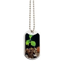Oak tree (Quercus sp.) seedling Dog Tags