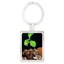 Oak tree (Quercus sp.) seedling Portrait Keychain
