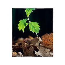 Oak tree (Quercus sp.) seedling Throw Blanket