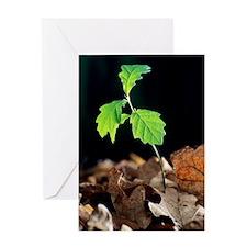 Oak tree (Quercus sp.) seedling Greeting Card