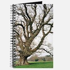 Oak tree Journal