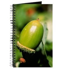 Oak acorn Journal