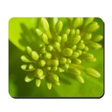 Detail of tropical flowers about to bloo Mousepad