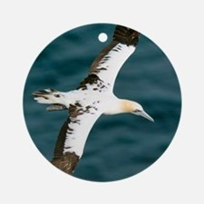 Northern gannet in flight Round Ornament