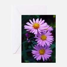 New York aster flowers (Aster sp.) Greeting Card