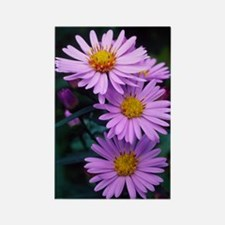 New York aster flowers (Aster sp. Rectangle Magnet