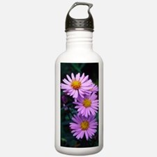 New York aster flowers Water Bottle
