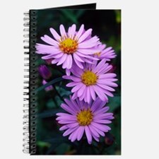 New York aster flowers (Aster sp.) Journal