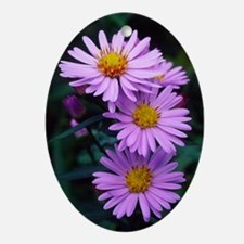 New York aster flowers (Aster sp.) Oval Ornament
