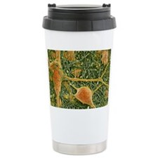 Nerve cells and glial cells, SE Travel Mug