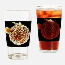 Neutrophil engulfing TB bacteria, S Drinking Glass