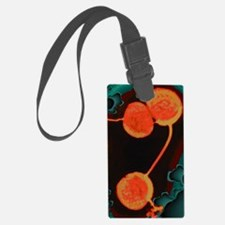 Neisseria gonorrhoeae bacteria,  Luggage Tag