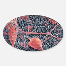 Nerve cells and glial cells, SEM Sticker (Oval)