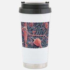 Nerve cells and glial cells, SE Stainless Steel Tr