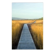 Nature reserve boardwalk Postcards (Package of 8)