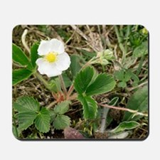 Musk strawberry (Fragaria moschata) Mousepad