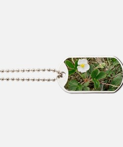 Musk strawberry (Fragaria moschata) Dog Tags