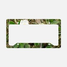Musk strawberry (Fragaria mos License Plate Holder