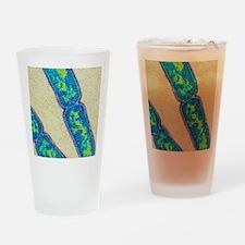 Mycobacterium tuberculosis bacteria Drinking Glass