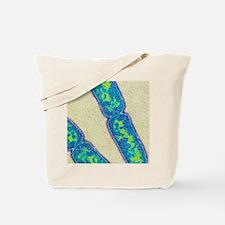 Mycobacterium tuberculosis bacteria Tote Bag