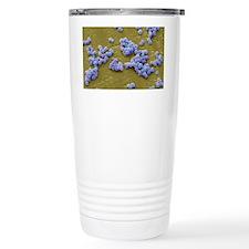 MRSA bacteria, SEM Travel Mug