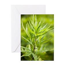 Mugwort (Artemisia vulgaris) Greeting Card