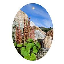 Mountain sorrel (Oxyria digyna) Oval Ornament