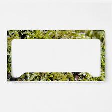 Moss License Plate Holder