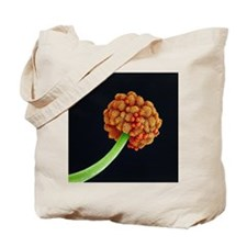 Morning glory pollination, SEM Tote Bag