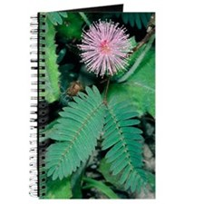 Mimosa pudica Journal