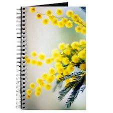 Mimosa (Acacia dealbata) Journal