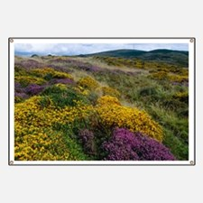 Mixed wildflowers on moorland Banner