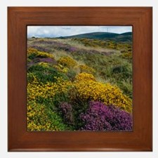 Mixed wildflowers on moorland Framed Tile