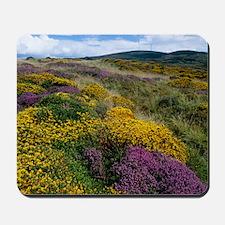 Mixed wildflowers on moorland Mousepad