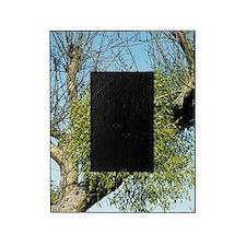 Mistletoe Picture Frame