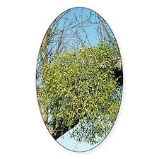 Mistletoe Decal