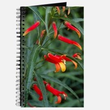 Mexican cardinal flower 'Jack McMaster' Journal
