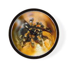 Mexican red-leg tarantula Wall Clock