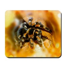 Mexican red-leg tarantula Mousepad